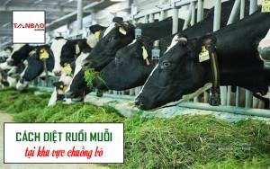 Cách diệt ruồi muỗi tại khu vực chuồng bò